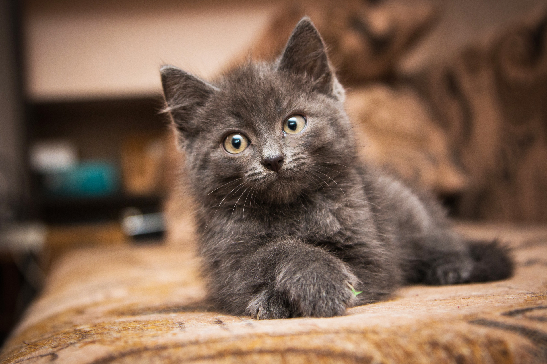 Что нужно знать при покупке кошки