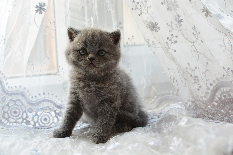 Какого котенка лучше брать: породистого или дворового, мальчика или девочку, в каком возрасте забирать и как выбрать самого лучшего