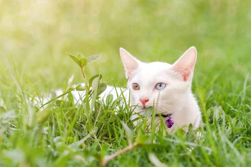 Порода кошек с разными глазами не существует: фото и научное объяснение красивого феномена
