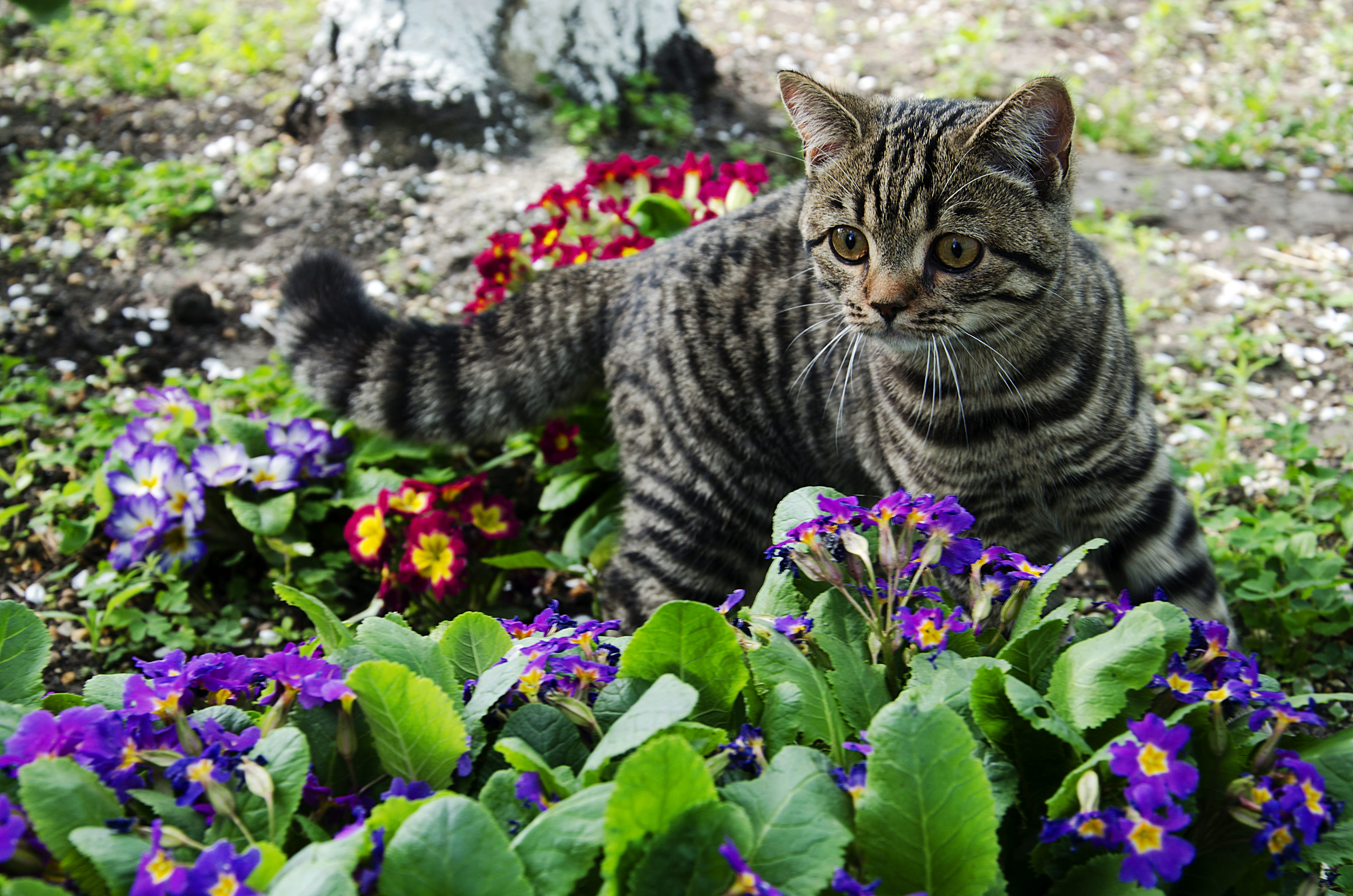 Бешенство у кошек: признаки заболевания, угроза заражения, диагностика, опасность для человека, истории из жизни