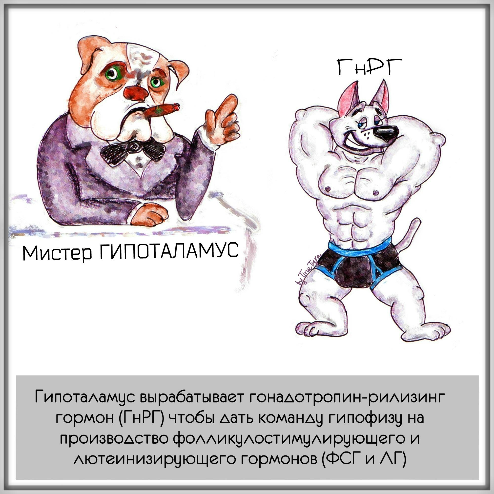 himicheskaya-kastraciya-kobelya