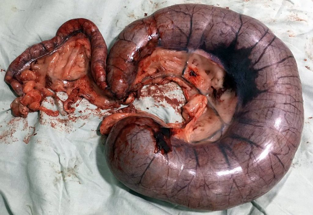 plyusy-i-minusy-sterilizacii-sobaki